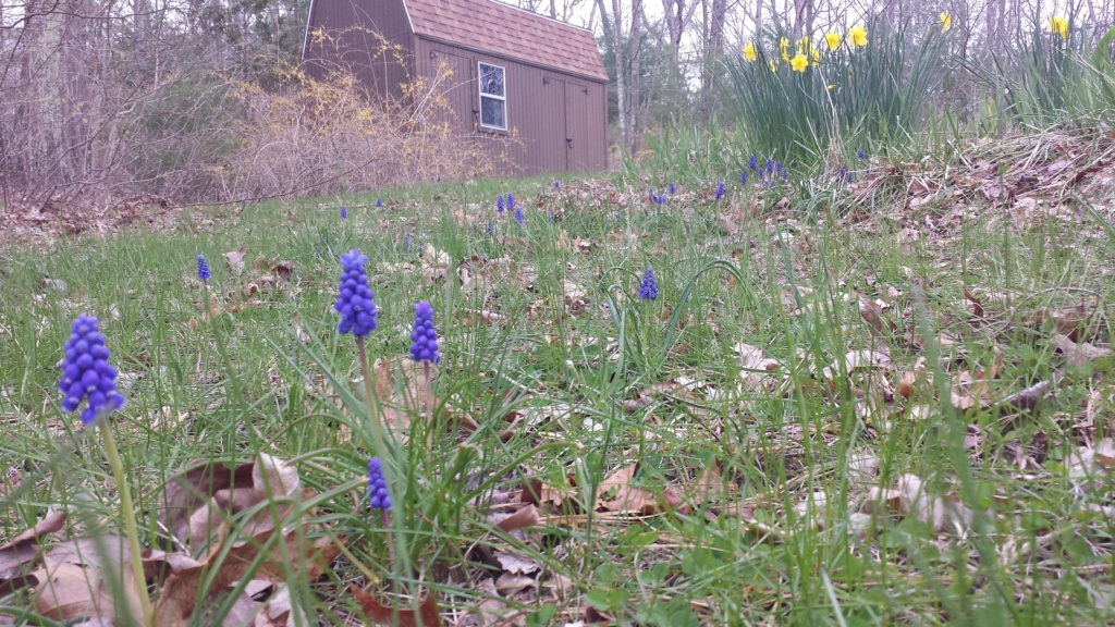 Springtime in N. Rhode Island USA 20200420