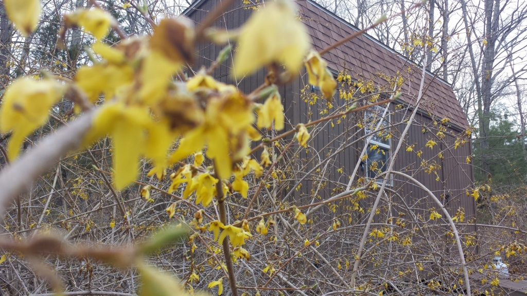 Springtime in N. Rhode Island USA 20200421