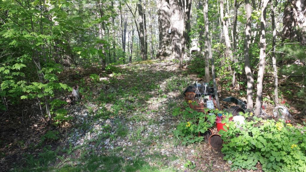 Springtime in N. Rhode Island USA 20200515