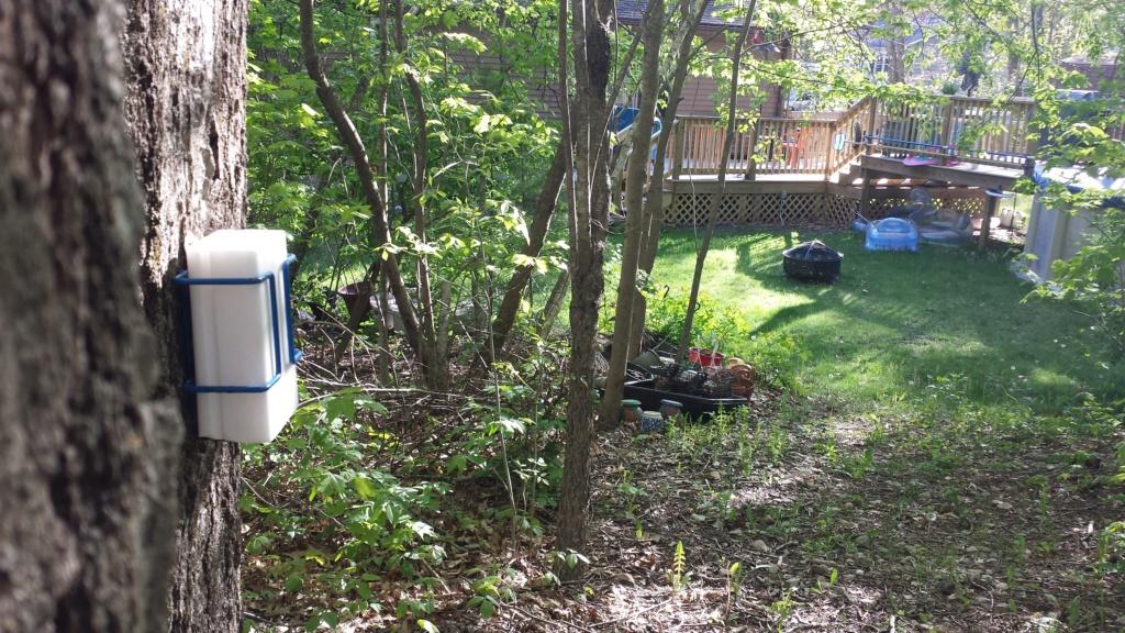 Springtime in N. Rhode Island USA 20200516