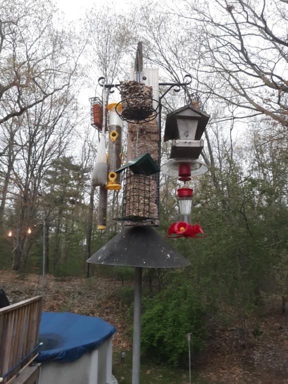 Bird feeder, new visitor 20210512