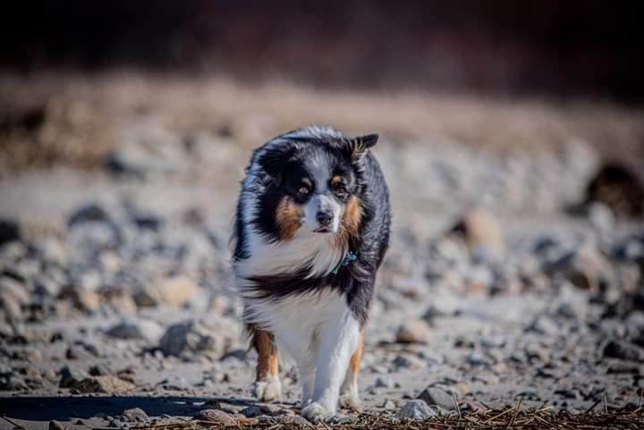 "Meet ""Atlas"" the dog Fb_img17"