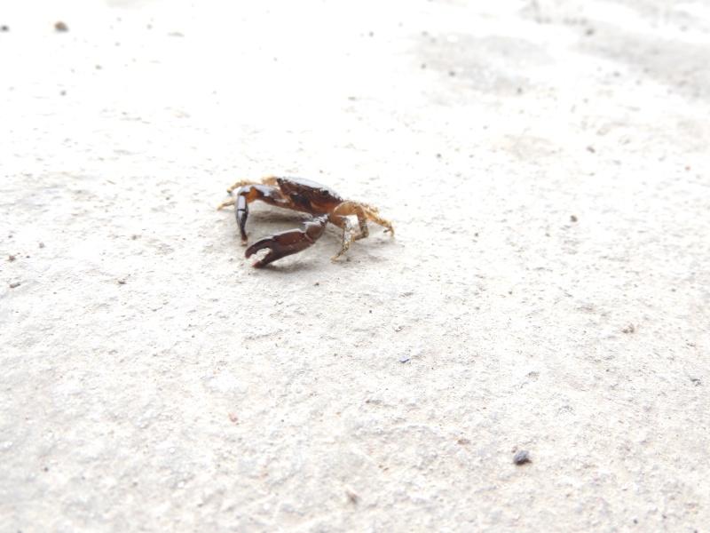 mon 300L eau de mer...... mon vivant Crabe10