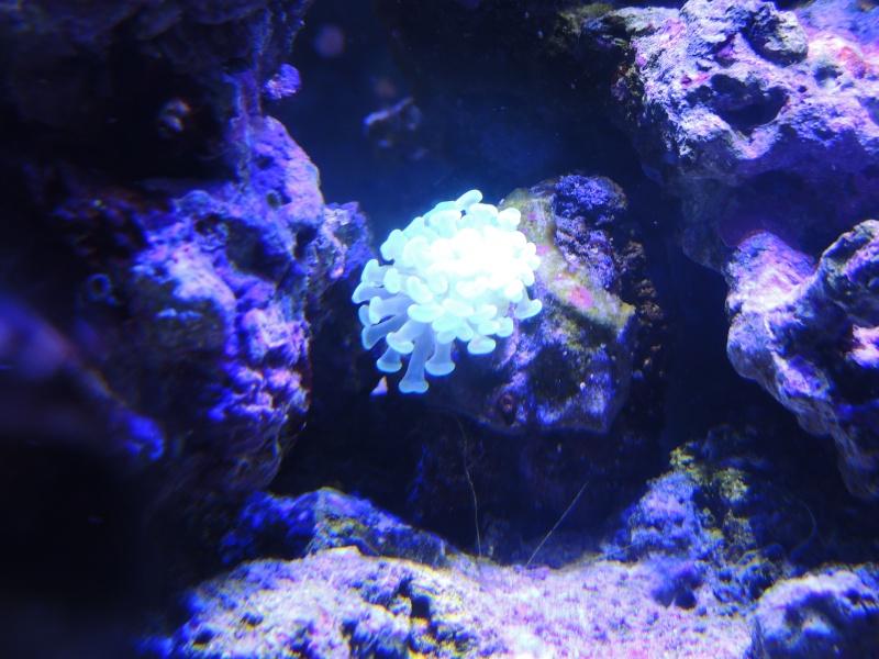 mon 300L eau de mer Euphyl11