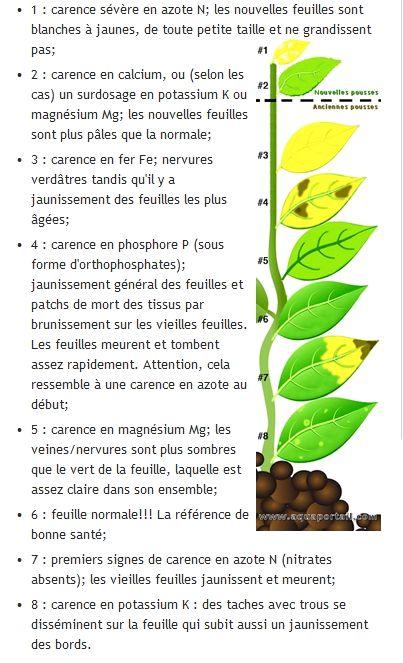 taches noires sur plusieurs plantes - Page 2 Feuill10