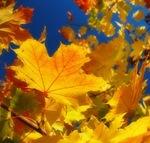 Золотая Осень 0b243112