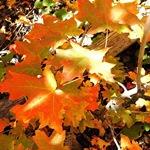 Золотая Осень 0b247312