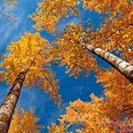 Золотая Осень 0b24d611