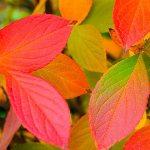 Золотая Осень 12856110