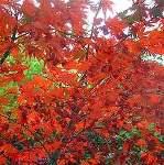 Золотая Осень 22_ddd10