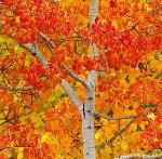 Золотая Осень 239s_211