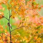 Золотая Осень 24887210
