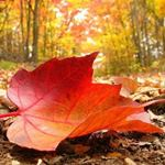 Золотая Осень 42230610