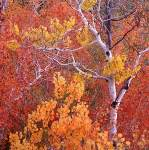 Золотая Осень 4_2_dd10