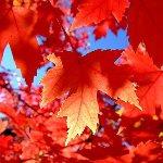 Золотая Осень 57485210