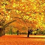 Золотая Осень 63471610