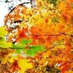 Золотая Осень 65731410