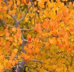 Золотая Осень 6_2_dd10