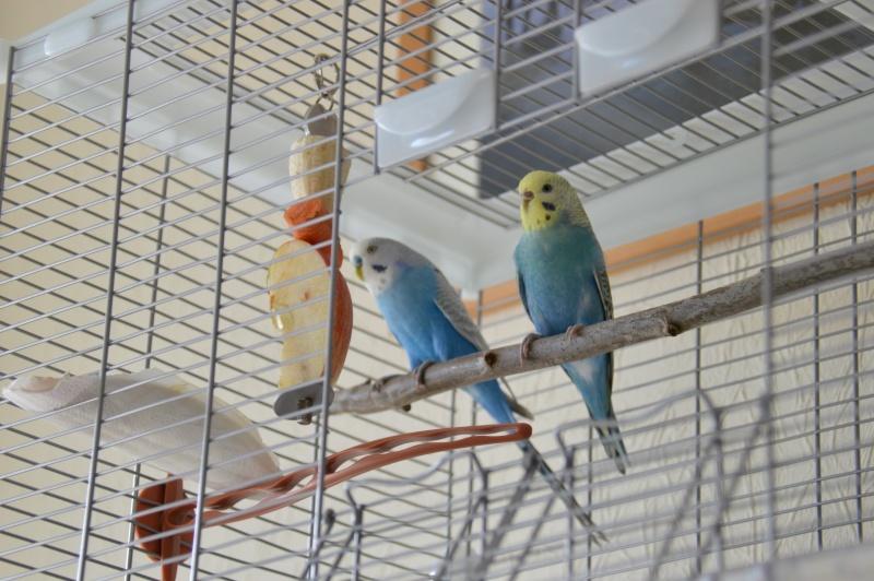 Mes nouveaux compagnons. Dsc_0011