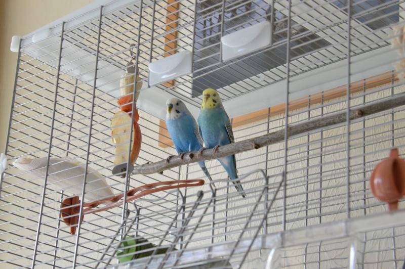 Mes nouveaux compagnons. Dsc_0012
