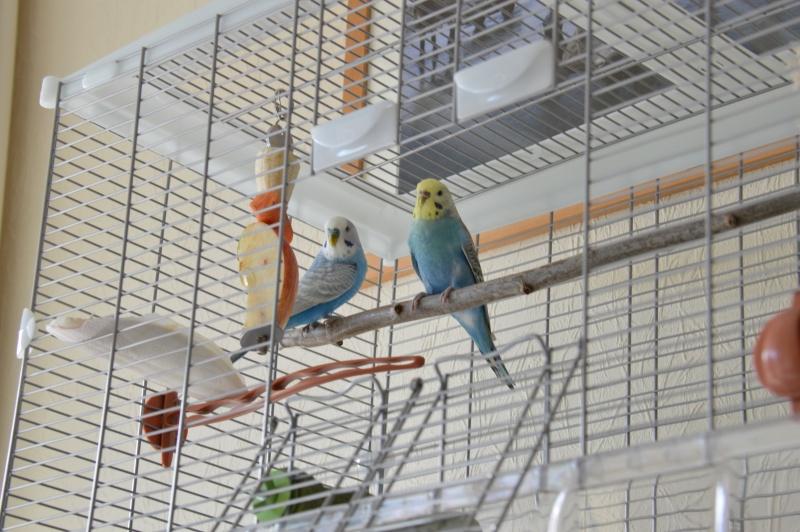 Mes nouveaux compagnons. Dsc_0013