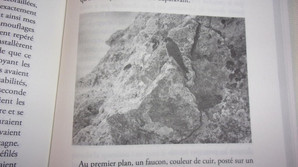 [Tesson, Sylvain] La panthère des neiges 100_0812