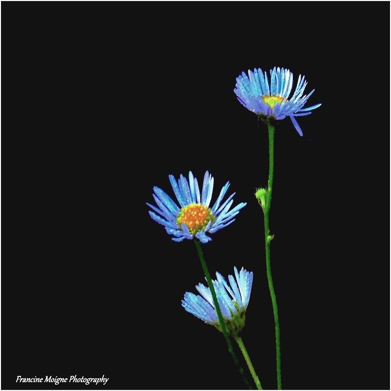 Les soeurs bleutées 025_co13