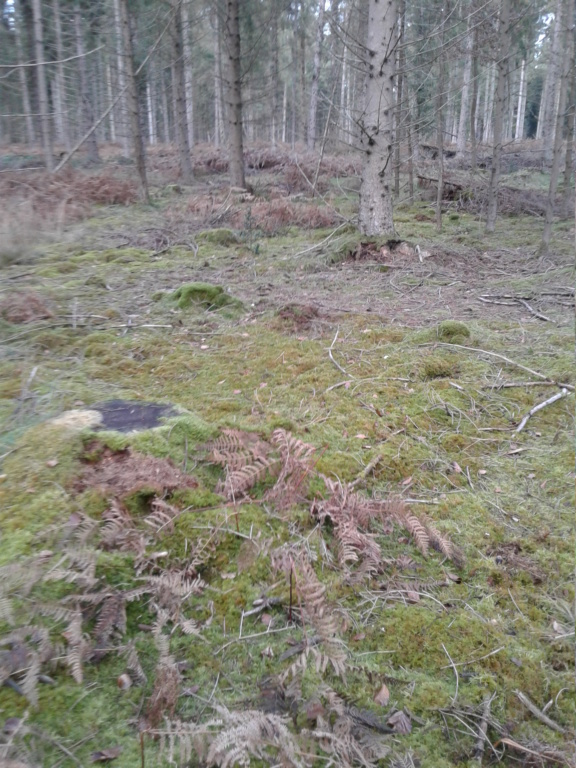 Forêt de Brotonne (76) 20190110