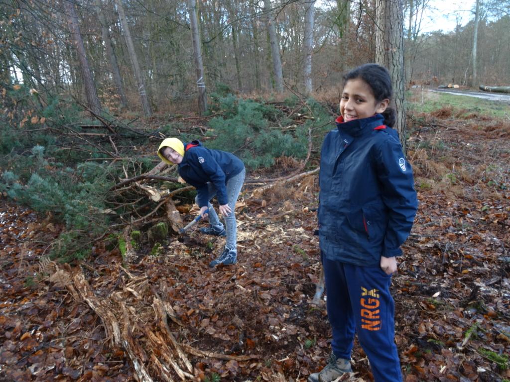 Forêt de Brotonne (76) Dsc02511