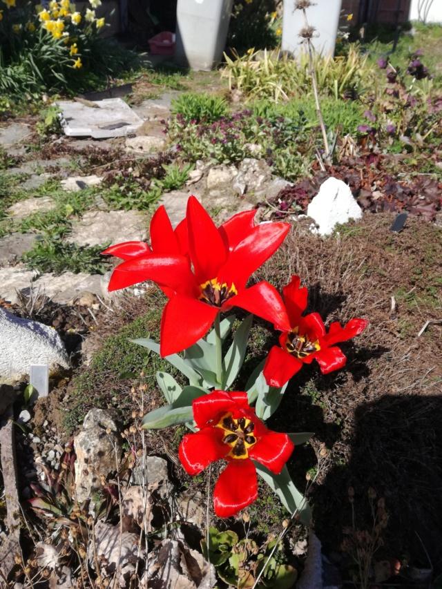 Tulipa 2021 Img_2051