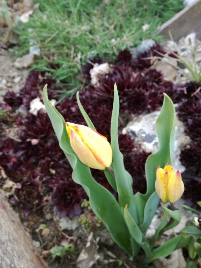 Tulipa 2021 - Page 2 Img_2055