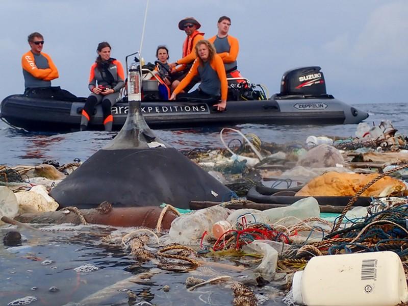 Une bouteille plastique retrouvée quasi intacte après 50 ans en mer 0220