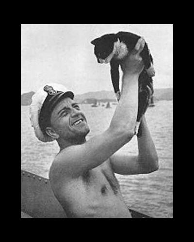 On dit souvent, à titre ironique que les chats ont 9 vies, mais est-ce réellement ironique en ce qui concerne Sam l'insubmersible ? 137310