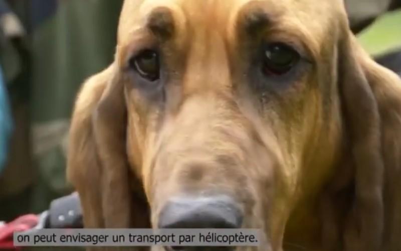 Exercice héliporté pour les chiens secouristes des Savoie 13731411