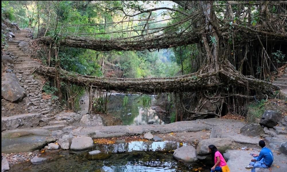 Adieu béton : en Inde, on construit des ponts végétaux 2119