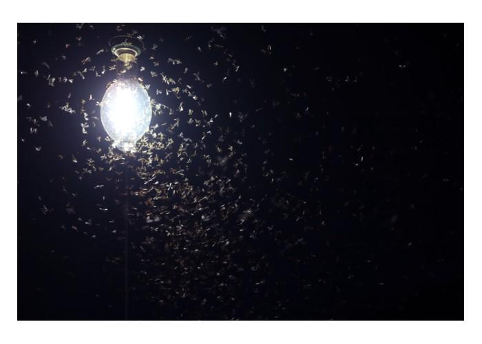 Vos lampes de jardin tuent les insectes A10