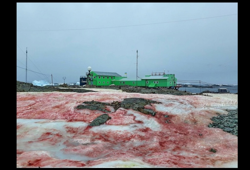Une algue rouge dévore les glaciers de l'Antarctique Descha73