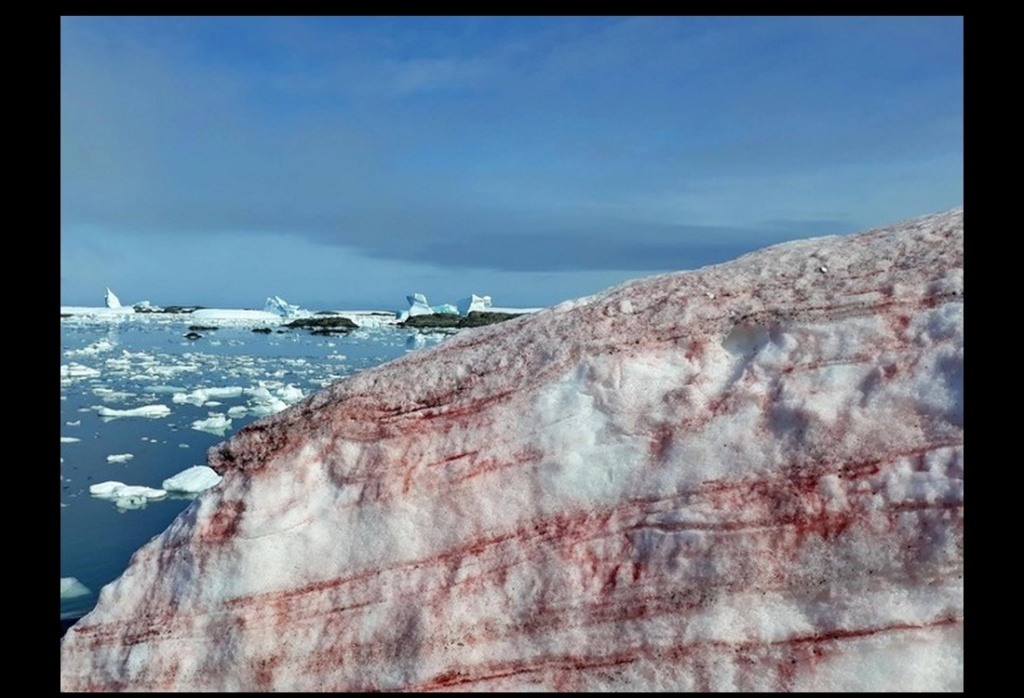 Une algue rouge dévore les glaciers de l'Antarctique Descha74