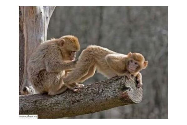 Un homme et sa femme se rendirent au zoo...... Sans1276