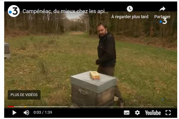La population d'abeilles augmente en Bretagne Sans2026