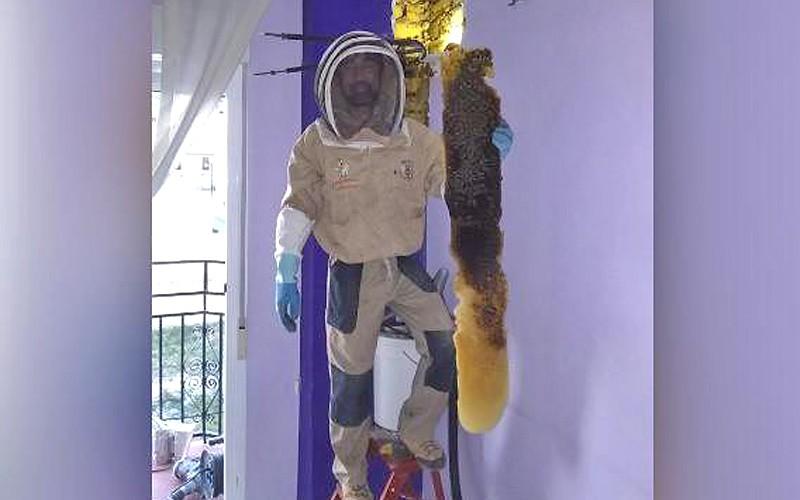 Un bourdonnement les réveillait la nuit... Le mur de leur chambre était infesté d'abeilles Sans2084