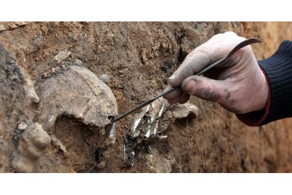 Marne : un agriculteur découvre des ossements de soldats de la Première Guerre mondiale Sans2277