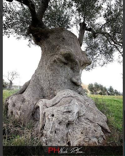 L'arbre pensant (Pouilles, Italie) Sans2679