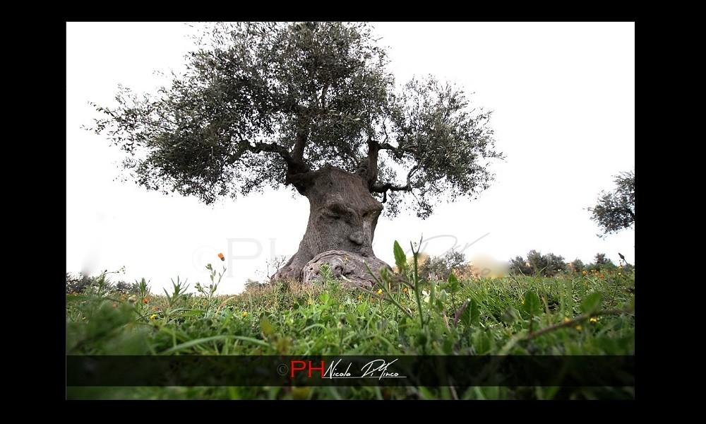 L'arbre pensant (Pouilles, Italie) Sans2680