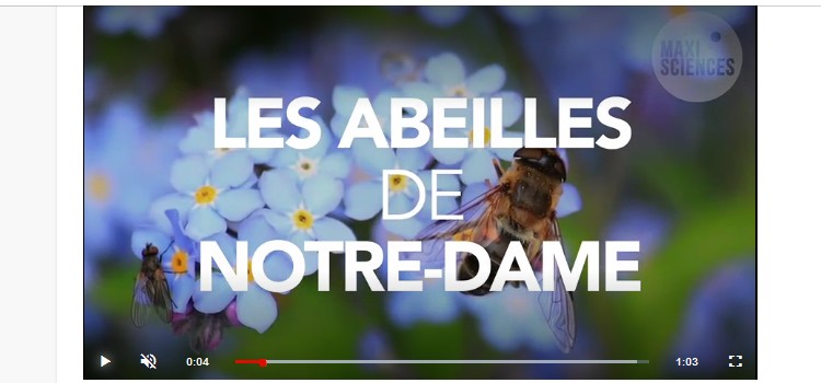 Incendie de Notre-Dame de Paris : les abeilles de la cathédrale sont saines et sauves Sans3169