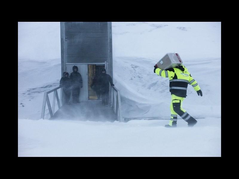 À quoi ça sert de stocker toutes les graines du monde en Arctique ? Sans3798