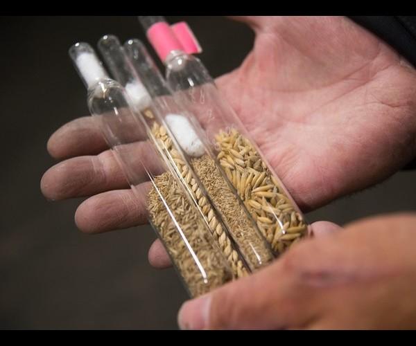 À quoi ça sert de stocker toutes les graines du monde en Arctique ? Sans3800