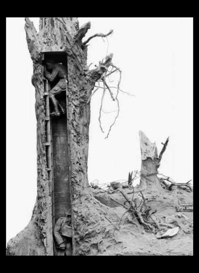 Un arbre de surveillance  Sans4985