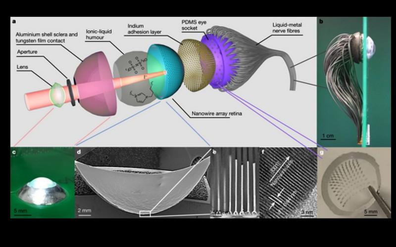 Un œil bionique à l'étude pour donner la vue aux non-voyants Sans4991