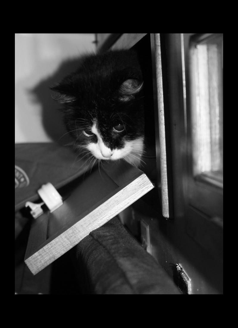 On dit souvent, à titre ironique que les chats ont 9 vies, mais est-ce réellement ironique en ce qui concerne Sam l'insubmersible ? Sans6142
